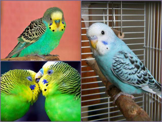 Re: попугаи